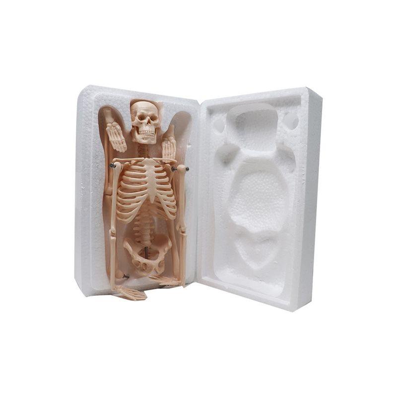Modelo-esqueleto-45cm-mini