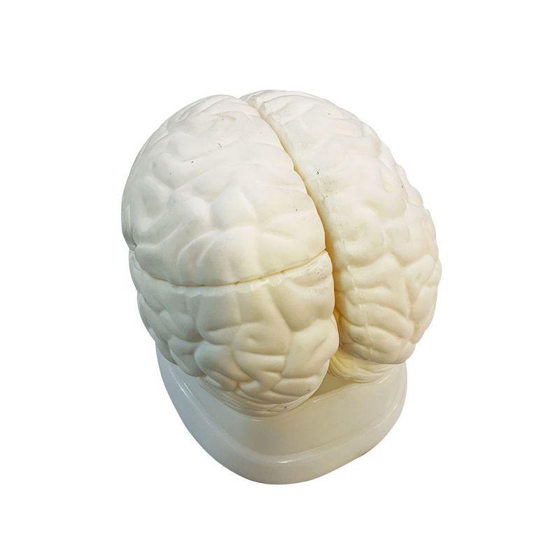 Modelo-cerebro-3-partes